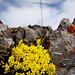 Blumenpracht am Gipfel.