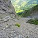die berühmte Adelbodener Kettenschlange schlängelt sich den Fels hinauf