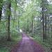 Es geht durch grünen Wald bei starkem Regen