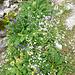 Bunter Blumenstrauß am Wegesrand