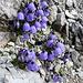 Zwei herrlich blaue Farbtupfer mitten im grauen Fels - nummero uno.