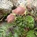Schon wieder ein Blümchen. Zählt eine zerzauste Pflanze ohne ersichtliche Blütenblätter noch als Blümchen?