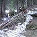 Il sentiero nel bosco è un continuo incontro con alberi caduti dalla tanta neve