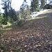 Rechts geht es hinauf zum Rütiberg (1011 m), links geht es zum... (03.11.12)