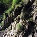 Wasser rinnt von den Felsen