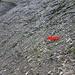 """...Rettungsaktion """"Stock"""" war etwas an der Grenze das Ding aus diesem abschüssigen Gelände zu bergen..."""