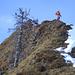 Abstieg vom Sisiger Spitz, begleitet von Tannenskeletten