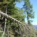Der Weg zur Cappella di Larecchio verläuft durch urtümliche Wälder.