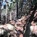 Durch schattige Wälder stetig nach oben
