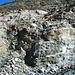 Gletscherzustieg über die Eisenleitern