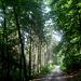 Im kühlen Bleeksgrund, einem einsamen Waldtal im Süntel.
