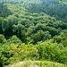 Herrliche Wälder, vom Schrabstein aus gesehen.