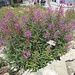 Gefälliger Blumengarten auf dem Hohen Kasten