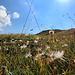 Schneeflocken im Sommer - verblühter Silberwurz ziert den Kanzberg-Rücken
