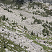 paesaggio (con il Corte di Cima dell'alpe di Nassa)