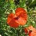 Hurra, auch heute sehen wir meine Lieblingsblume :-)