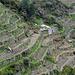 Weinbaugebiet zwischen Volastra und Corniglia - Wanderweg unter der Häusergruppe