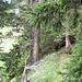 Im Wald an Lawinenverbauungen, schon in der Nähe des Grates