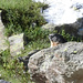 Marmotta guardiana....