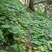 Trittspuren im Wald...