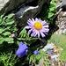 spezielle Blumen-Kombination