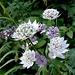 die schmucken Blüten haben Besuch erhalten