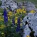 Blumenpracht zwischen Felsen
