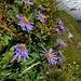 Blumen-Schönheiten am Steilhang