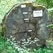 320 jährige Eiche