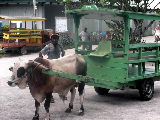 Ox-cart taxi auf La Digue. Fuer die Tauchausruestung ;-))