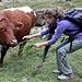 ....Elisa tenta l'approcio con una vitellona maculata