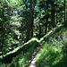 auf schönen Waldwegen zurück nach Saas Fee