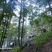 Aufstieg durch den steilen Buchenwald