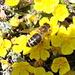 Auch die Bienen sind schon fleissig
