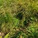 Hoppla, da taucht ja die Chammhaldenroute im hohen Gras auf!