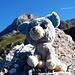Glubschi am Zittergrat Klettersteig