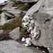 Auffällige Steinformation (?)<br />Von weitem sah es so aus wie ein versteinertes Kleinschaf.