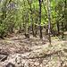 Nel bosco 2