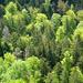 Frühlings-Wald aus der Vogelperspektive