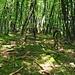 Einstieg ins Val Ruina: grün in grün!