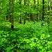 Prächtiger Wald im Frühlingskleid auf dem Schinberg