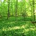 Auch auf dem Frickberg ist es grün