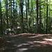 Zwei Witze, im Wald versteckt