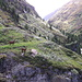Die beiden Ziegen, die sich den Übergang über die heiklen Stellen am Sturzbach nicht zutrauten
