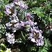Floristische Leckerbissen