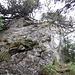 Die erste Felsstufe am Grat zum Schär-Nordgipfel. Sie ist heute dank der Legföhren im oberen Bereich trotz der Nässe gut zu überwinden.