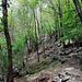 Im Wald zwischen Roncascio und Vatagn.