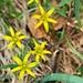 Blumen auf den Wiesen der Malga Valloare