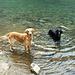 Badespass für Finny und Shaddy im Schönrinnen-Karsee - endlich die erhoffte Abkühlung.