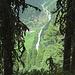 Schon unterhalb der Nisslalm - gruftige, bemooste  Bergkiefern geben den Blick frei auf den nach Gries hinabrauschenden Winnebach.